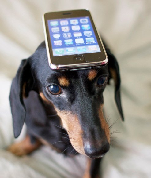 Make Your Dog A Happy Pooch With These 2 Smartphone Apps