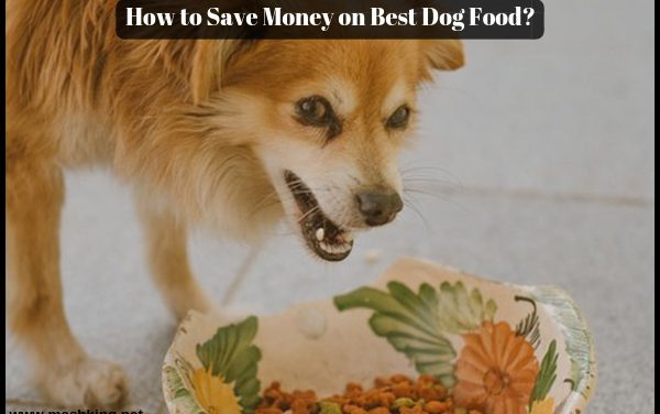 How to Save Money on Best Dog Food ?