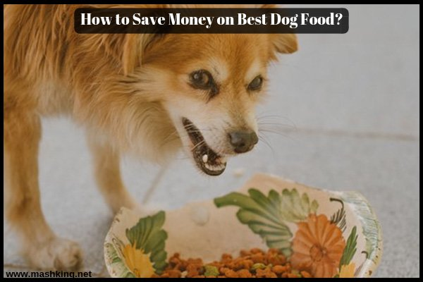 How to Save Money on Best Dog Food